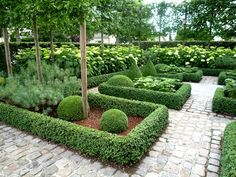 Hydrangea and pleaching with buxus edging