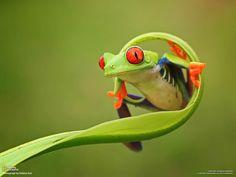 Amazing photo by Shikhei Goh (via National Geographic on Facebook)