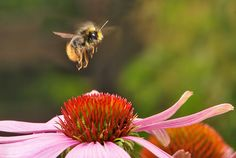 Attract Beneficial Insects with these Garden Herbs!