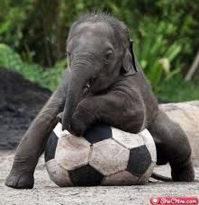 So adorable.  I want my own elephant!