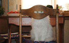 These Funny Animals (40 pics) - Izismile.com