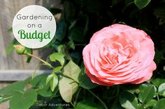 7 Great Tips for Gardening on a Budget! If you love gardening but are turned off by the cost, here's 7 ways to get a gorgeous garden without busting the bank. Check them out at www.makinglemonadeblog.com! #gardening #frugal