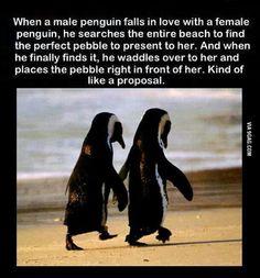 That is so romantic!