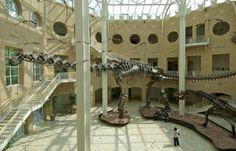 Fernbank Museum -- Atlanta