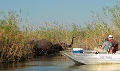 A boat cruise on the Kwando at Namushasha River Lodge.