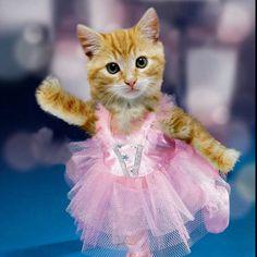 ballerina, Cat