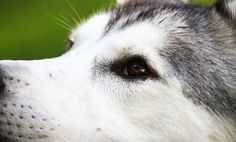 What to Say (& Not Say) to Someone Who Lost a Pet lost, pet