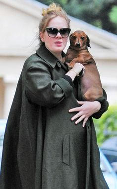 Adele has a doxie!