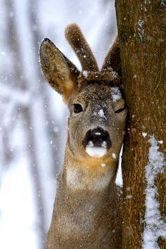 Sexy deer is winking at you.