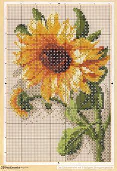 Sunflower Chart_2