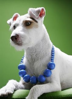 i like blue & white, but beads on a dog...that's not necessary; (however, he is kind of cute all dressed up).