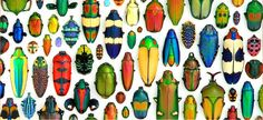 Christopher Marley's fascination with arthropods is plainly evident in his colorful assemblage of these amazing creatures.