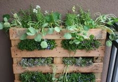 plant, garden ideas, wooden pallets, herbs garden, pallet gardening, small spaces, wood pallets, old pallets, wall gardens