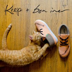 animals, shoe designs, animal collective, herringbone, sneakers, ginger cats, new shoes, friend, bon iver