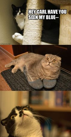 I. Love. This cat shit.