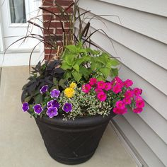 My front porch pots are looking lovely this year! Thanks Pinterest for the color combo!! color combo, front porch garden, front porches, front porch pots