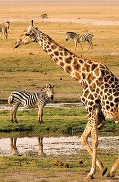 Go on safari in Kruger National Park in South Africa.