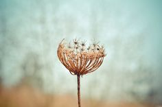 withered.   Flickr - Photo Sharing!