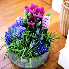 Forcing Spring Bulbs -- Trick some tulips, daffodils, or crocus into early bloom and enjoy spring months ahead of time. Plant, Spring Flowers, Bulb, Flower Ideas, Jewel Box, Winter Flowers, Hostess Gifts, Spring Blooms, Early Spring