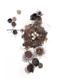 a collection of nests (mary jo hoffman)