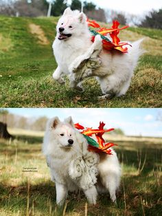 Amaterasu from Ōkami #Dog #Cosplay