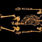 Science News for Kids! This skeleton found beneath a parking lot in England belonged to Richard III, who ruled England in the 15th century. The bones show his curved spine and reveal the injuries that killed him. Credit: Univ. of Leicester