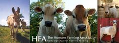The Humane Farming Association...STOP factory farming!