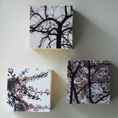 Idea from etsy but perfect for the pictures from our trees