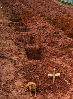 The 50 Best Animal Photos Of 2011  This dog was photographed during it's second day of vigil next to it's mistress's grave, who perished in a catastrophic landslide in Brazil...