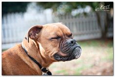 just so sweet. sweet, mothers, boxer dog, boxers, photography, cameras