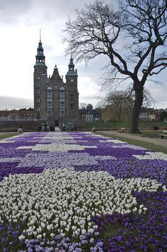 Denmark, Copenhagen - Crocus Bloom.