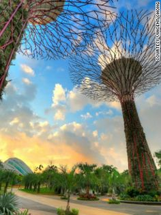 """Solar-powered supertrees, Singapore""  The manmade steel forest consists of 18 supertrees varying from 25 to 50 meters in height. They act as cooling ducts for nearby conservatories, collect rainwater, and 11 of them have solar photovoltaic systems to convert sunlight into energy."