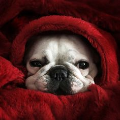 It's a stay in bed and snuggle kind of day...