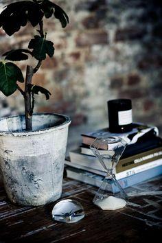 Love the plant & pot!