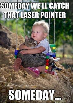 funny cats, funni, pet, funny commercials, baby cats, friend, little boys, funny babies, kid