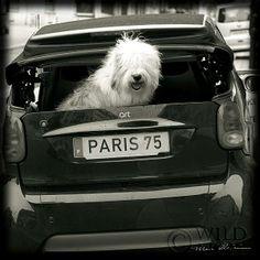Paris Dog -- cute!