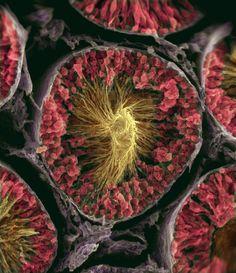 Sperm cells.