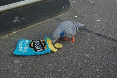 Feral pigeon eating crisps by textile artist Clare Sams
