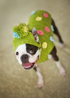 Knitted Dog Coat / Sweater Green with Flowers by Schuba4yourPooch, $35.00