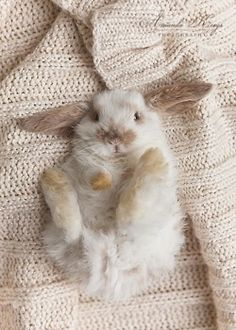 aw....bunny..