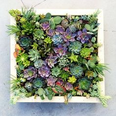 succulent wall art square hanging