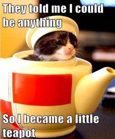 cats, cat tea, anim, teapots, meow, teas, kitti, thing, lolcat