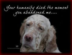#animaladvocacy