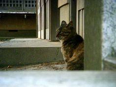狛江八幡神社の猫