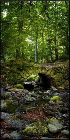 Fairy Bridge!  (Reelig Glen, Scotland)