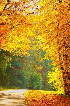 Going Through Autumn