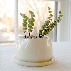 More pots for plants $34