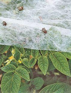 Summerweight Garden Fabric 6' x 20' by Gardener's Supply, http://www.amazon.com/dp/B007ROUOVC/ref=cm_sw_r_pi_dp_rlHSrb1H3F83V