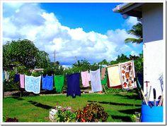 Laundry Soap Nuts