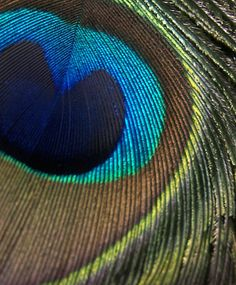 Peacock Feather... love the colors!!